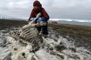В Норвегии на острове Шпицберген найдены мертвыми 200 оленей