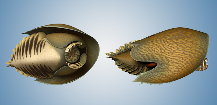 Палеонтологи нашли крупнейших хищников кембрийского периода.Вокруг Света. Украина