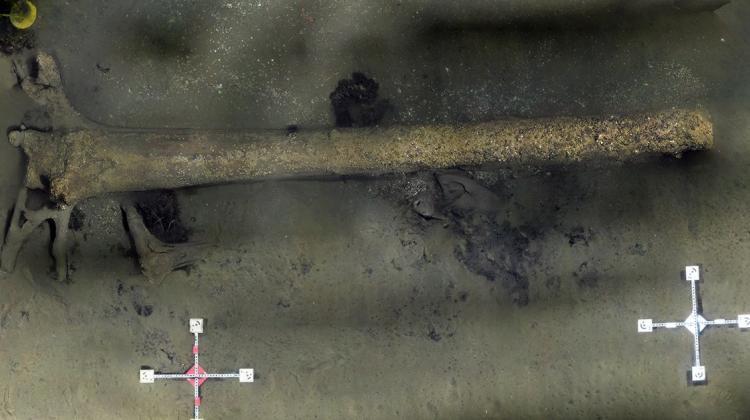 У берегов Литвы нашли древний лес, затонувший 10 тысяч лет назад