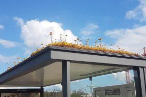 В Нидерландах сотни автобусных остановок покрыли растениями