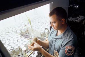 NASA накормило тараканов лунной пылью
