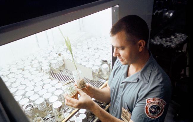 NASA накормило тараканов лунной пылью.Вокруг Света. Украина