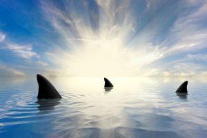 Браконьеры за год убивают 70 миллионов акул