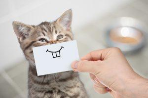 Кошачий корм поможет владельцам животных избавиться от аллергии