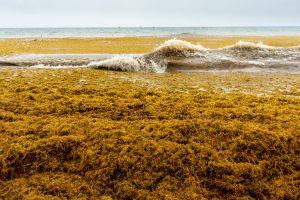 Зафиксировано наибольшее цветение водорослей в мире