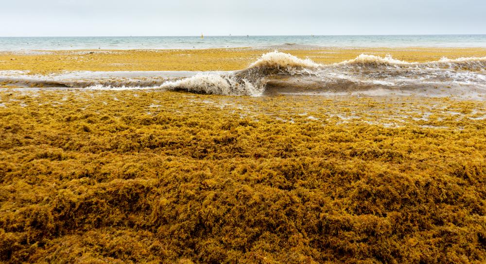 Зафиксировано наибольшее цветение водорослей в мире.Вокруг Света. Украина