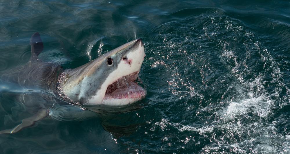 Во Флориде акула покусала 16-летнюю девушку