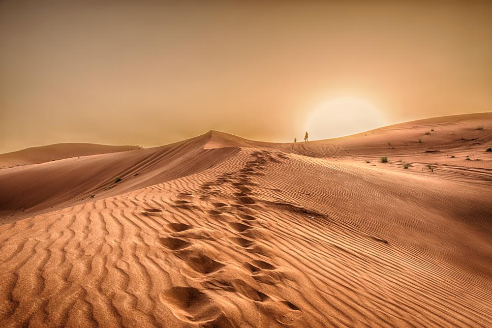 В древней Сахаре жили морские гиганты