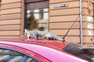 Во Львове впервые в мире пересчитали бездомных котов