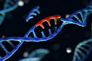 В Китае представили новую технологию редактирования генов
