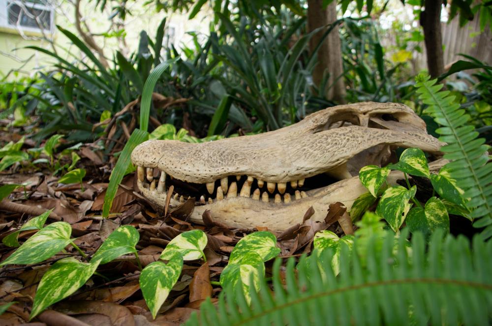 Крокодилы охотились на динозавров — палеонтологи