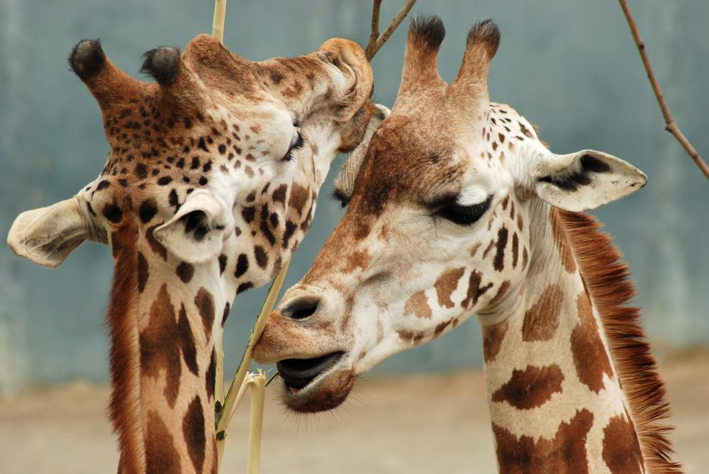 Зоопарк Мюнхена знакомит гостей с животными-бисексуалами