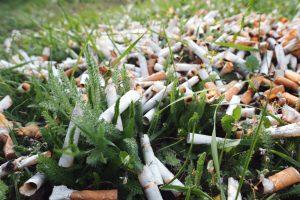 Выброшенные сигаретные окурки останавливают рост растений
