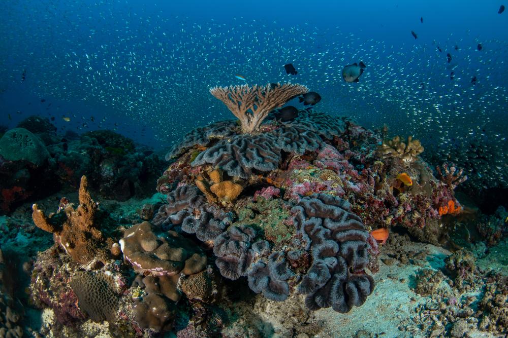 Твердые кораллы Большого Барьерного рифа массово деградируют
