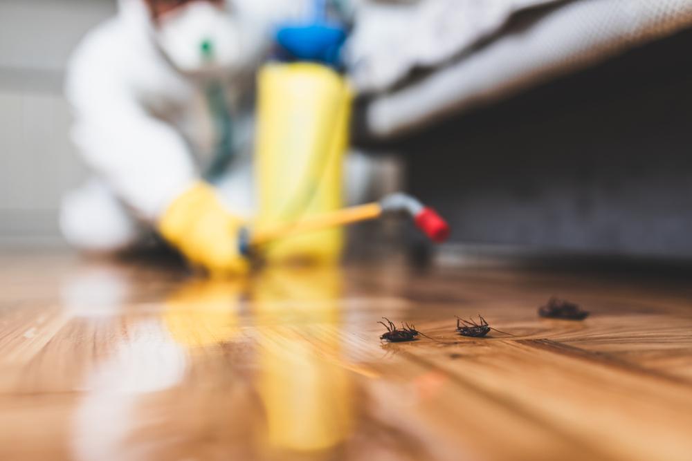 Тараканы скоро станут неуязвимы для инсектицидов