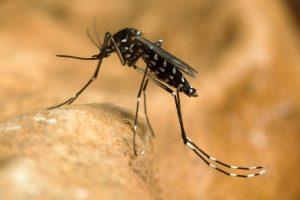 В ряде районов Китая почти полностью уничтожили один из видов комаров