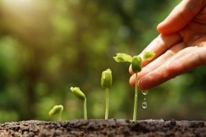 Исследование: растения не чувствуют боли и одиночества