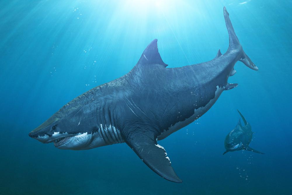 Мегалодону все по зубам: какой была самая большая рыба в истории
