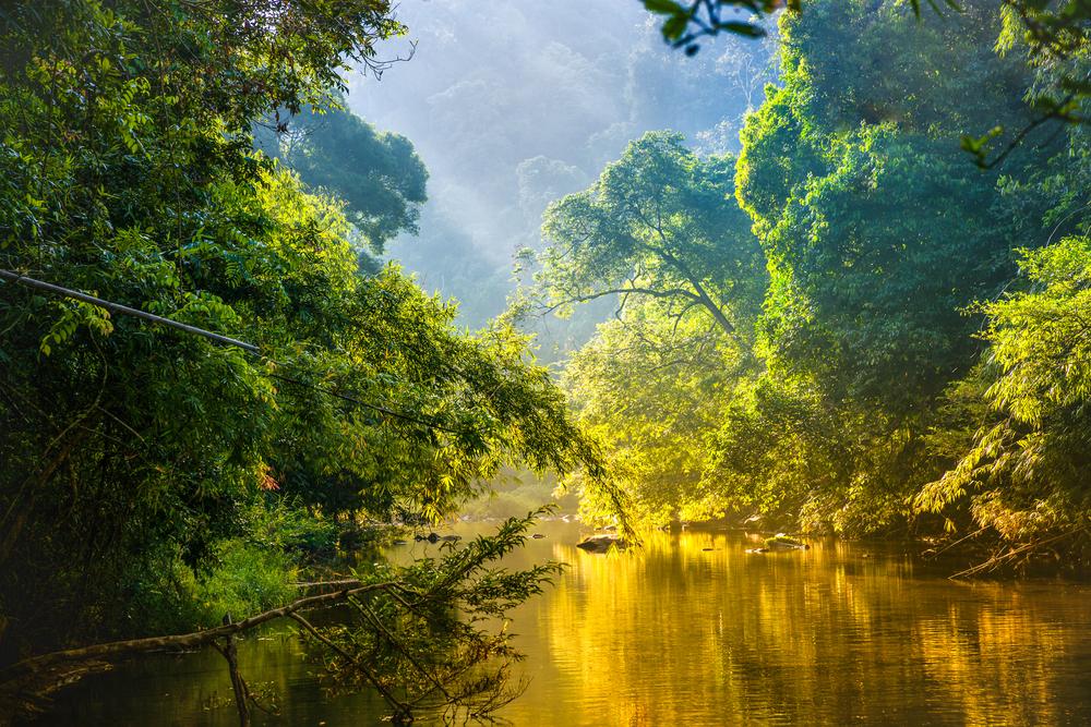 Мужчину из исчезающего племени Амазонки сняли на видео