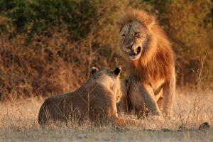 В Ботсване диких животных посчитали с помощью фотографов-любителей