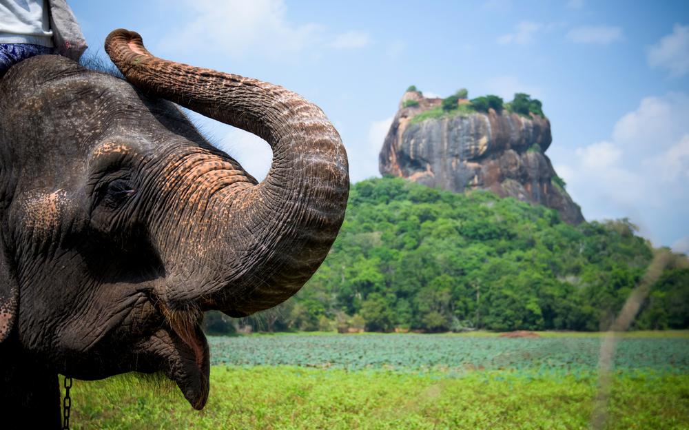 Цены на авиабилеты в Шри-Ланку упадут