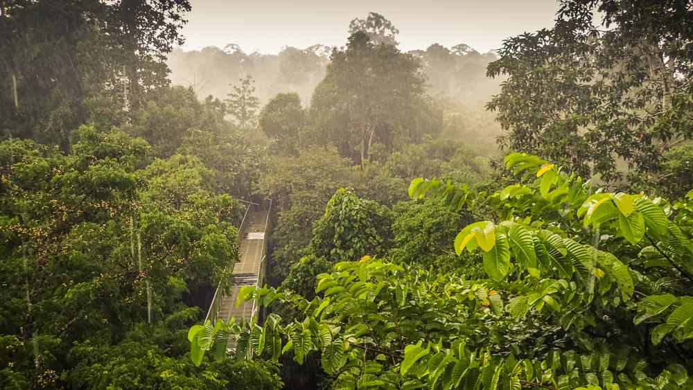 Борнео
