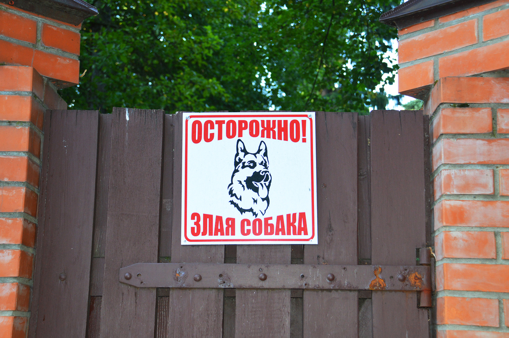 Бойся супердога: в России утвердили список опасных собак