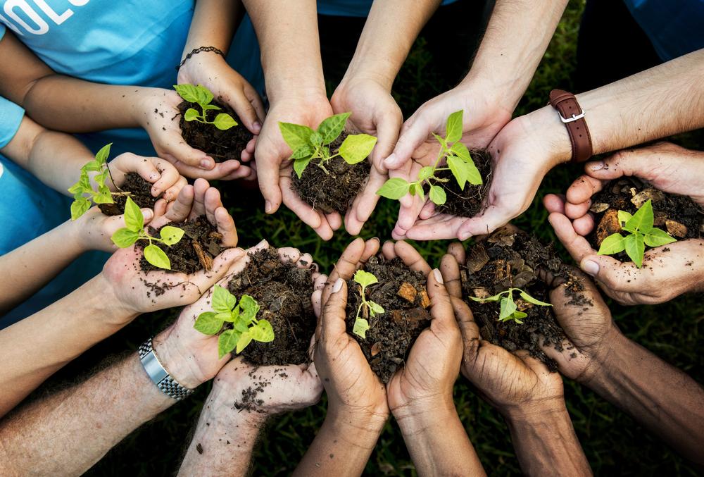 Планету можно спасти, посадив 900 млн гектаров леса