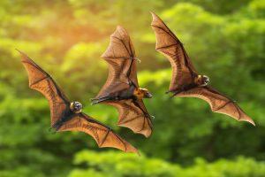 В США таинственный грибок уничтожает летучих мышей