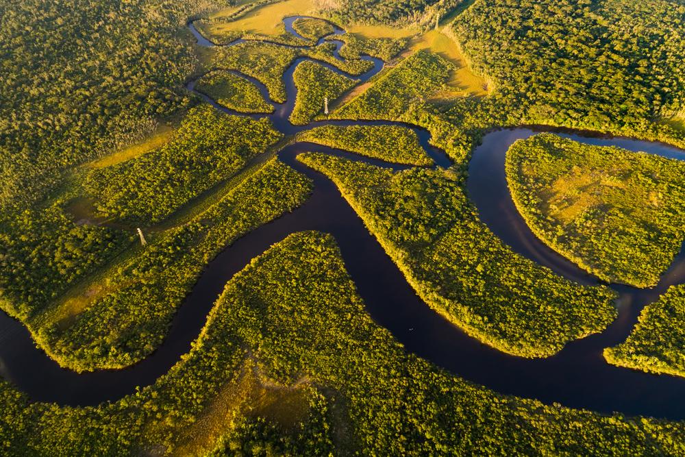 Вырубка амазонских лесов приближает климатический кризис