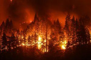 В Португалии горят леса - 20 человек пострадали