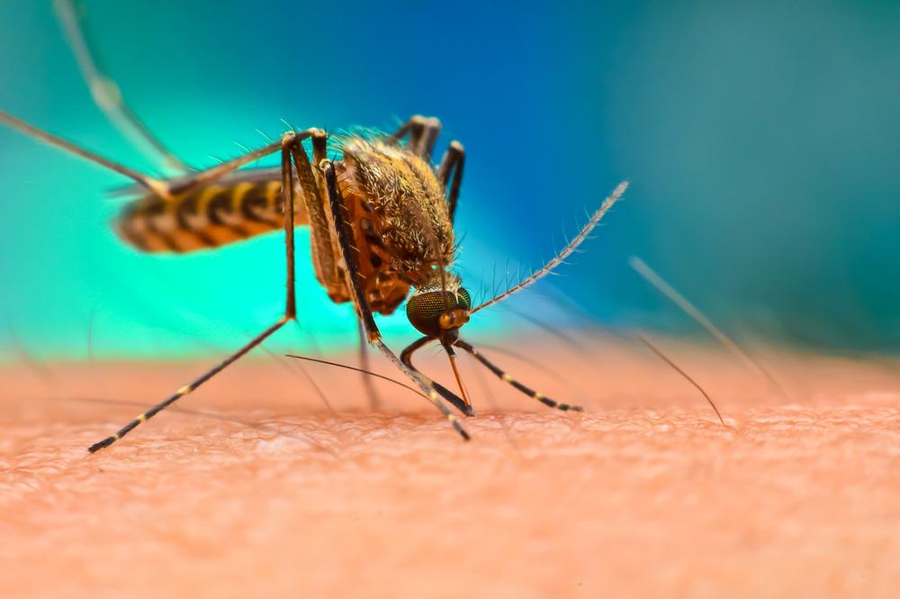 Комары Флориды переносят вирус, вызывающий отек мозга