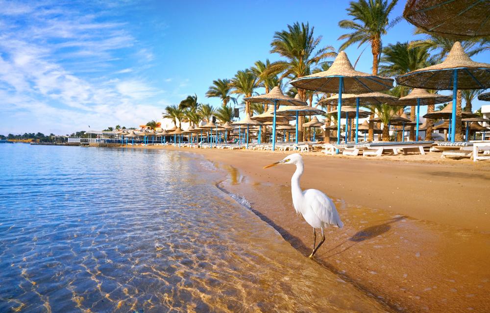 Египетские курорты вводят запрет на пластик