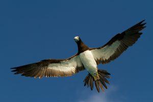 Птицам с темными перьями на крыльях легче летать