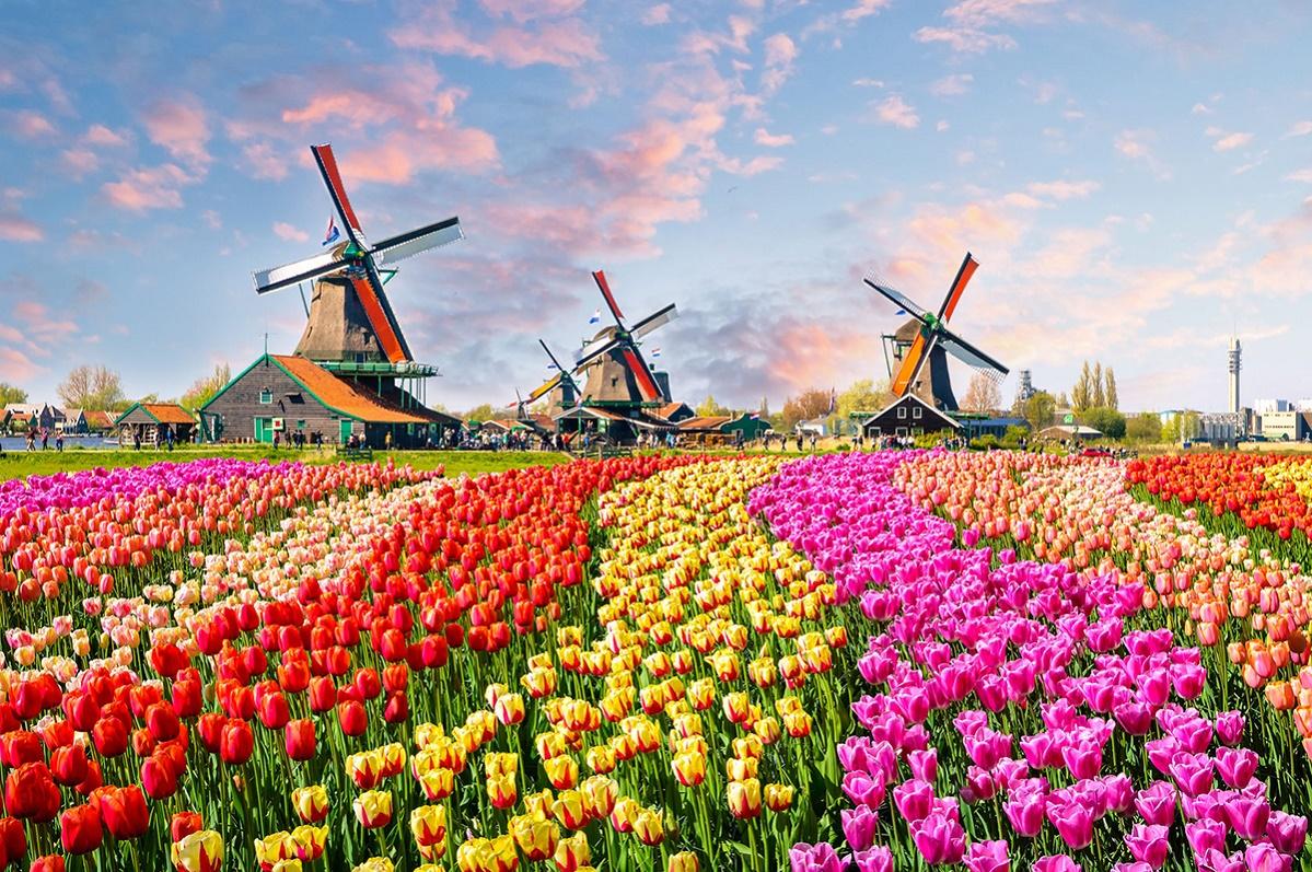 100 причин посетить Голландию и Амстердам прямо сейчас