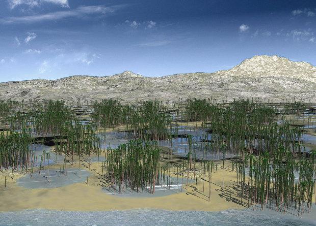 В Китае нашли окаменелости древнейшего леса в Азии.Вокруг Света. Украина