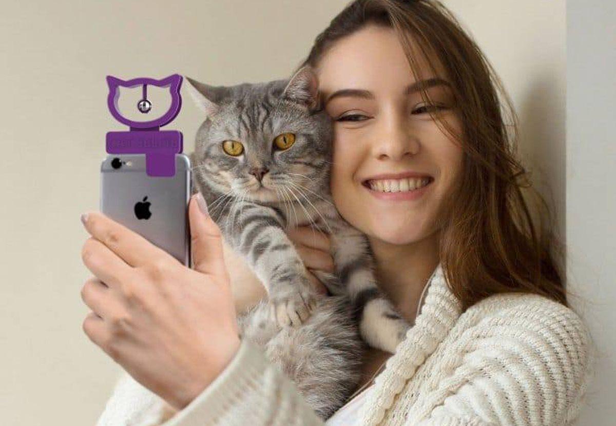 У британских котов появился аксессуар для селфи