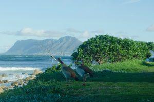Июль в Кейптауне: путешествие на край Земли