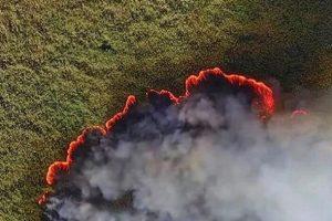 Пожары в Сибири заставили животных идти к людям