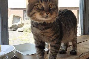 Исторический музей Днепра принял на работу кота