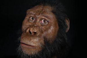 Ученые показали, как выглядел предок человека, живший 3,8 миллиона лет назад