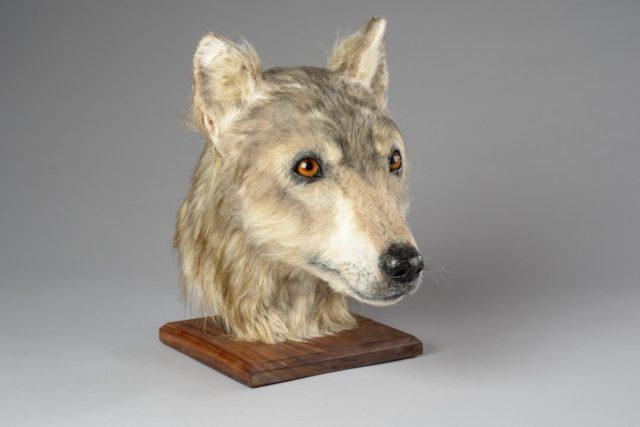 Ученые восстановили облик пса, жившего до нашей эры.Вокруг Света. Украина