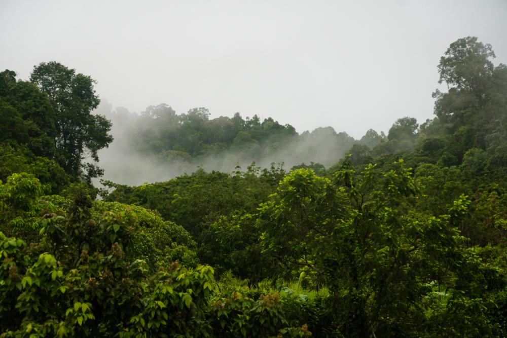 В джунглях Малайзии нашли умершую от голода британку
