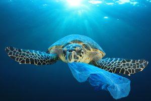 Зеленые черепахи едят пластиковые пакеты, принимая их за пищу