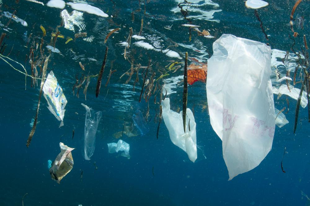 Негативное влияние человека на Мировой океан удвоилось – исследование.Вокруг Света. Украина