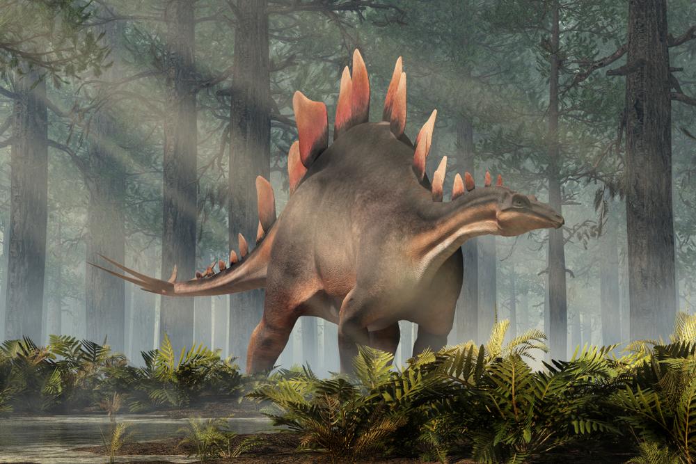 Палеонтологи описали древнейшего стегозавра из Марокко