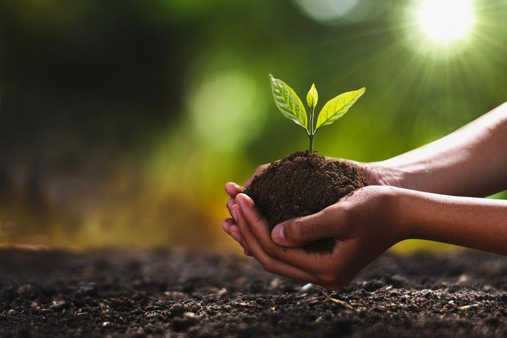 В Киеве будут бесплатно раздавать саженцы деревьев