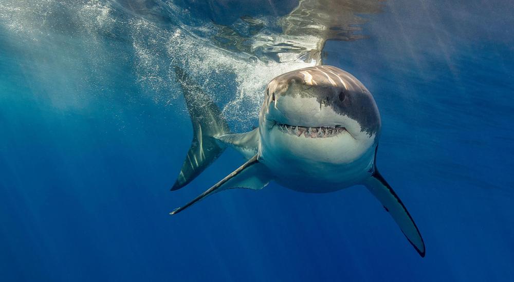 Во Флориде за сутки акулы трижды напали на людей