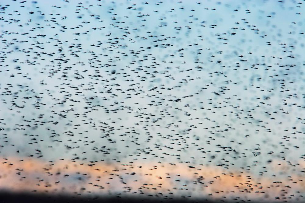 Под Мелитополем прошел смерч из насекомых