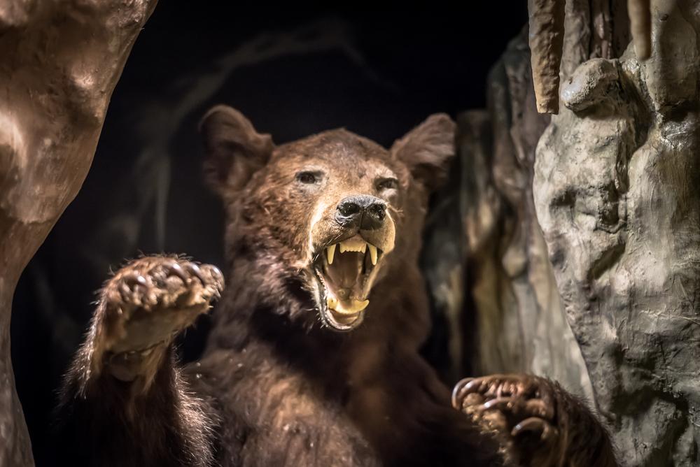 Пещерного медведя до вымирания довели люди – исследование